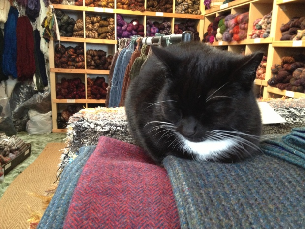 The shoppe had a cat!